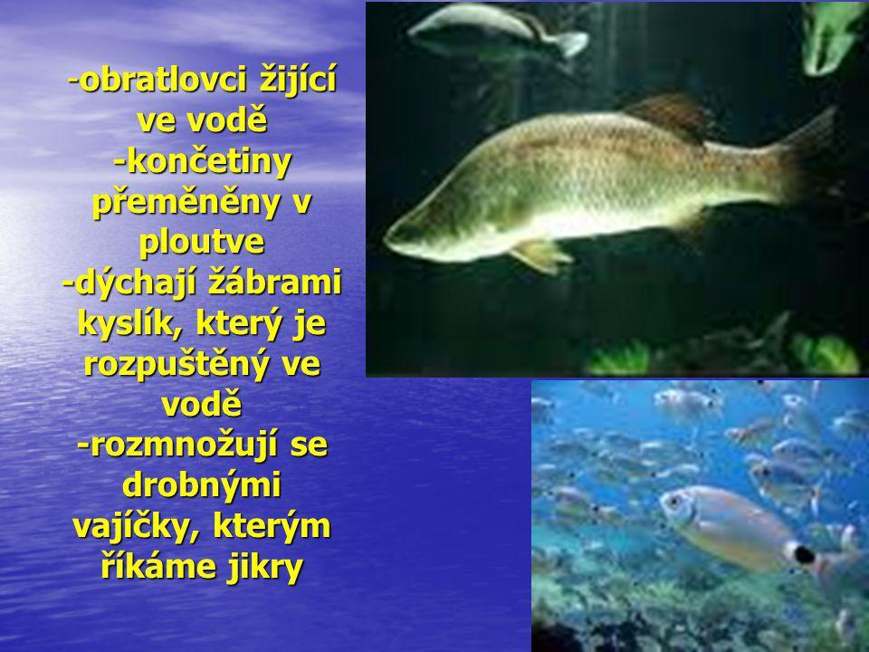obratlovci žijící ve vodě -končetiny přeměněny v ploutve -dýchají žábrami kyslík, který je rozpuštěný ve vodě -rozmnožují se drobnými vajíčky, kterým říkáme jikry