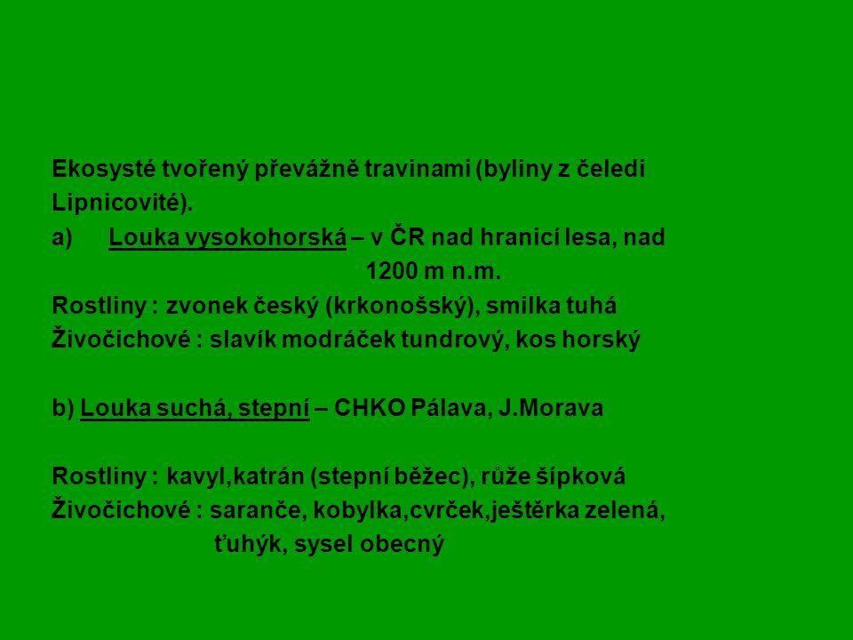 Zápis - LOUKA Ekosysté tvořený převážně travinami (byliny z čeledi
