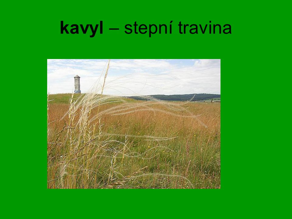 kavyl – stepní travina