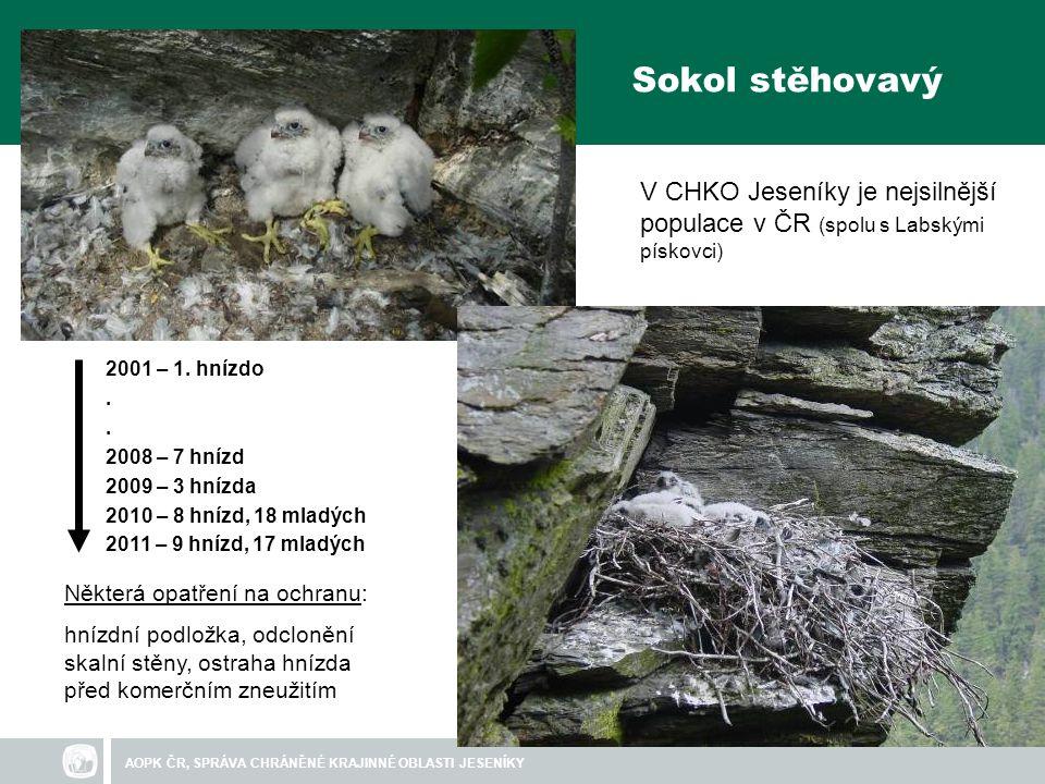 Sokol stěhovavý V CHKO Jeseníky je nejsilnější populace v ČR (spolu s Labskými pískovci) 2001 – 1. hnízdo.