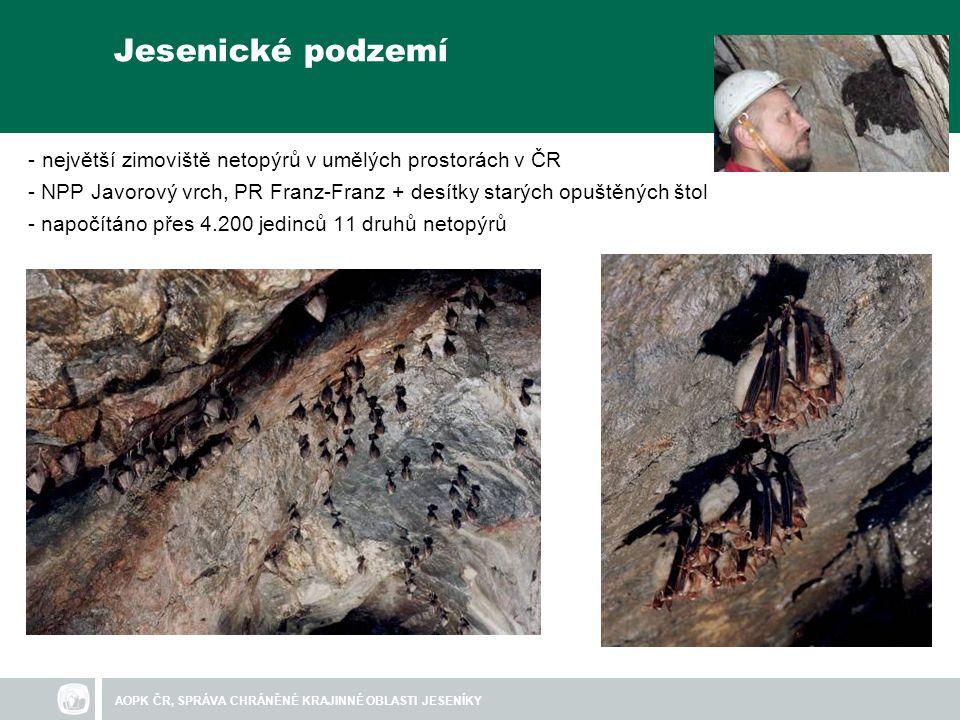 Jesenické podzemí - největší zimoviště netopýrů v umělých prostorách v ČR - NPP Javorový vrch, PR Franz-Franz + desítky starých opuštěných štol - napočítáno přes 4.200 jedinců 11 druhů netopýrů
