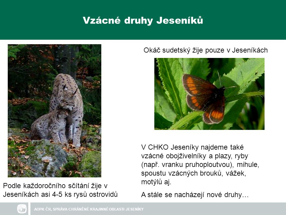 Vzácné druhy Jeseníků Okáč sudetský žije pouze v Jeseníkách