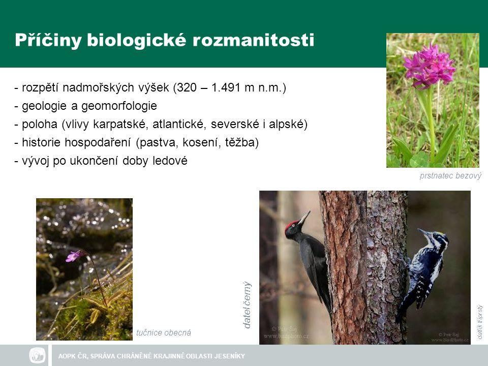 Příčiny biologické rozmanitosti