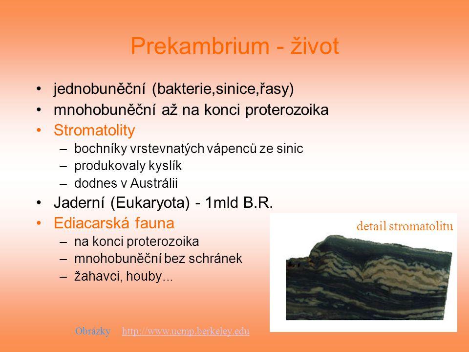 Prekambrium - život jednobuněční (bakterie,sinice,řasy)