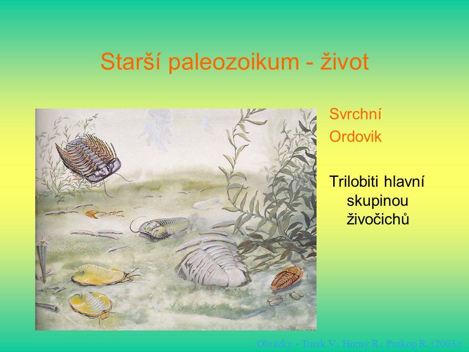 Starší paleozoikum - život