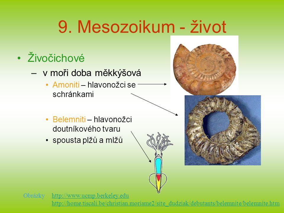 9. Mesozoikum - život Živočichové v moři doba měkkýšová
