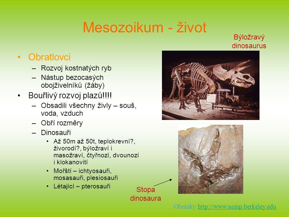 Mesozoikum - život Obratlovci Bouřlivý rozvoj plazů!!!!