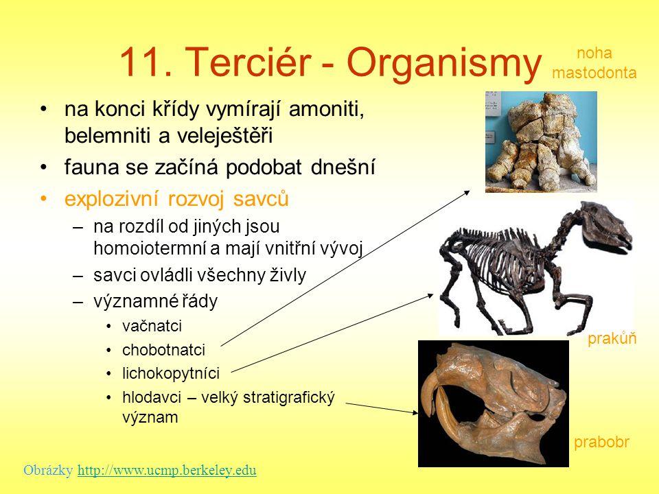 11. Terciér - Organismy noha mastodonta. na konci křídy vymírají amoniti, belemniti a veleještěři.