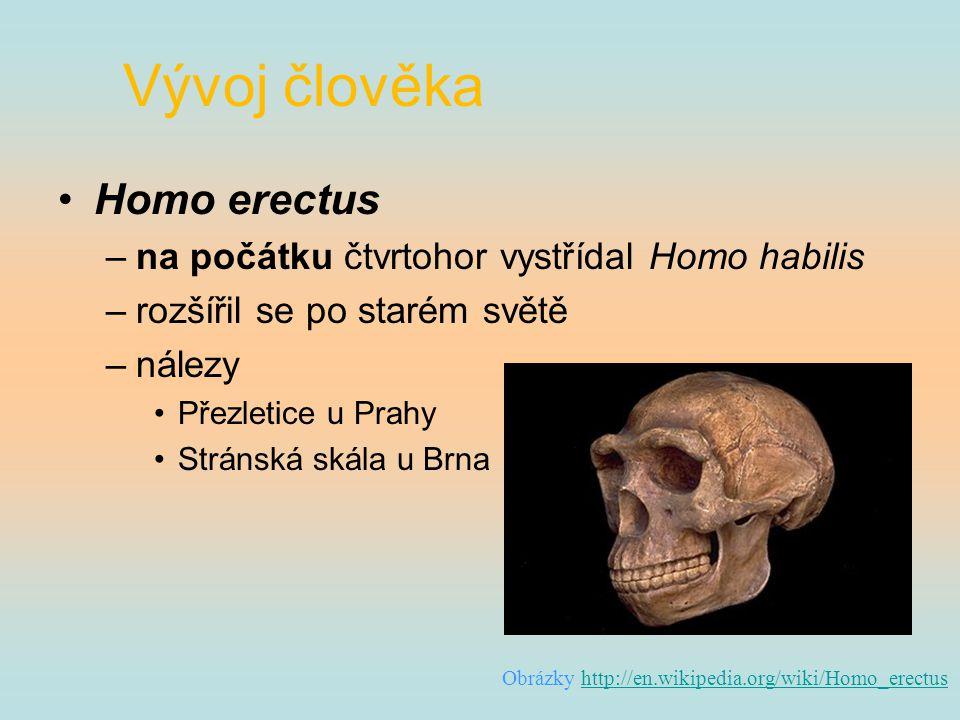 Vývoj člověka Homo erectus na počátku čtvrtohor vystřídal Homo habilis
