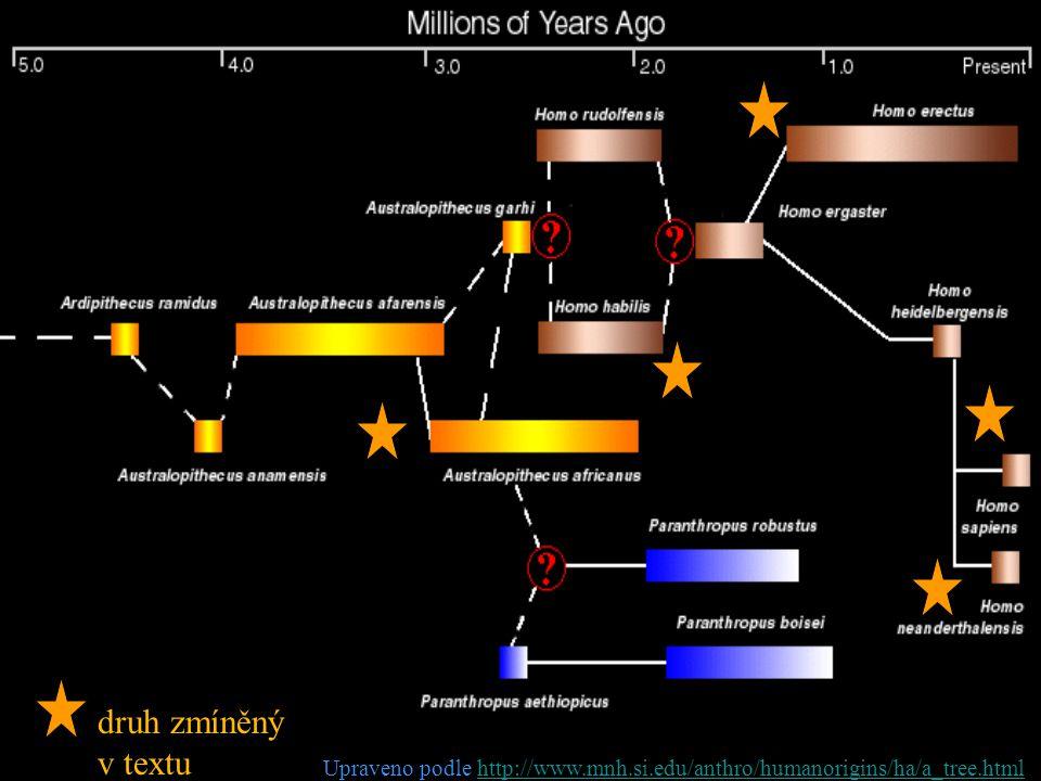 druh zmíněný v textu Upraveno podle http://www.mnh.si.edu/anthro/humanorigins/ha/a_tree.html