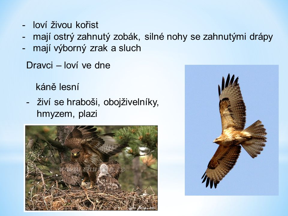 loví živou kořist mají ostrý zahnutý zobák, silné nohy se zahnutými drápy. mají výborný zrak a sluch.
