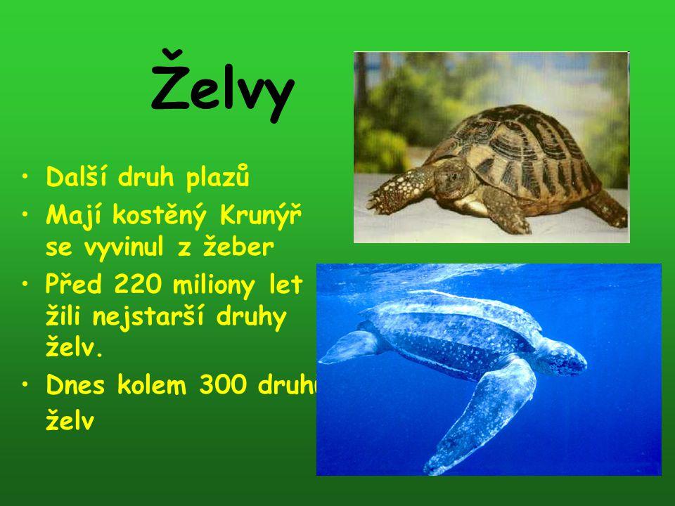 Želvy Další druh plazů Mají kostěný Krunýř se vyvinul z žeber