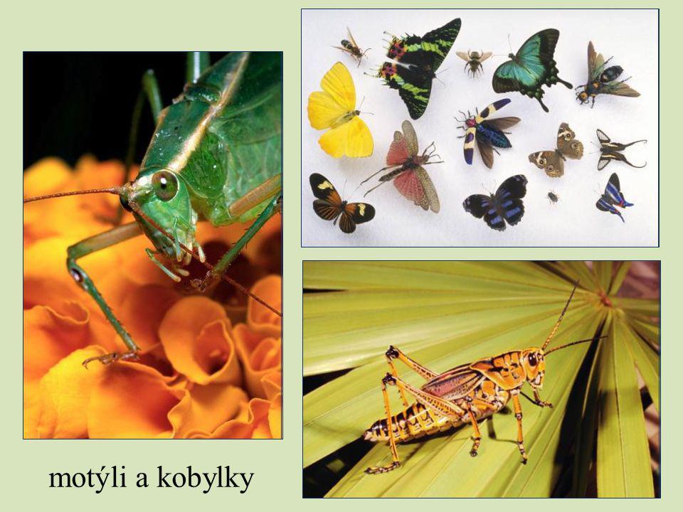 motýli a kobylky