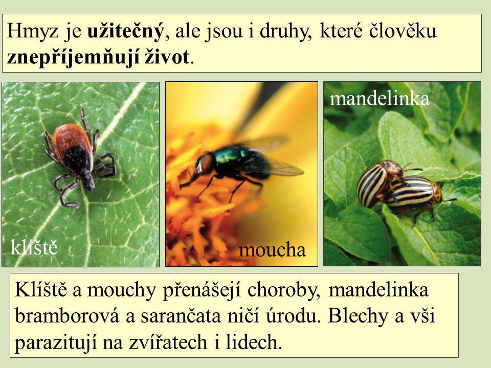Hmyz je užitečný, ale jsou i druhy, které člověku znepříjemňují život.
