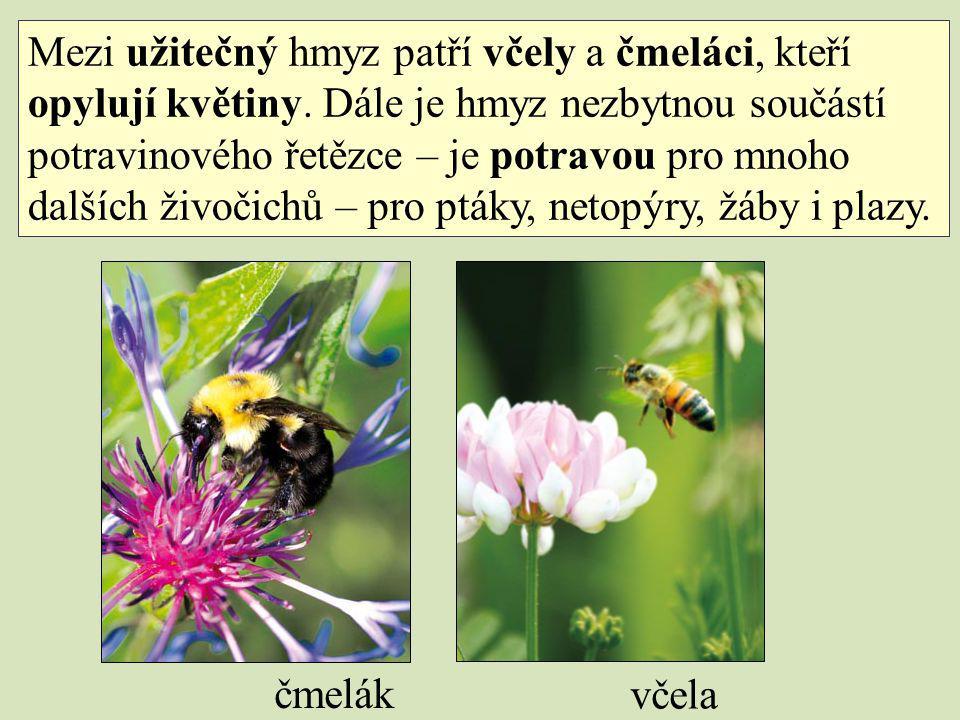 Mezi užitečný hmyz patří včely a čmeláci, kteří