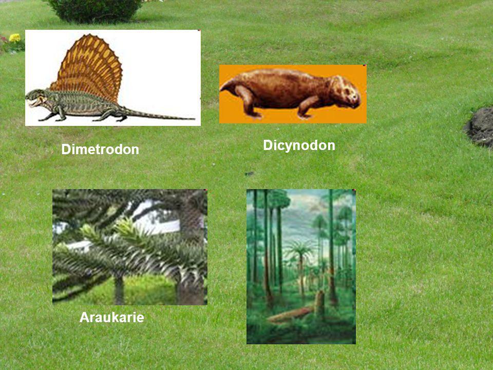 Dicynodon Dimetrodon Araukarie