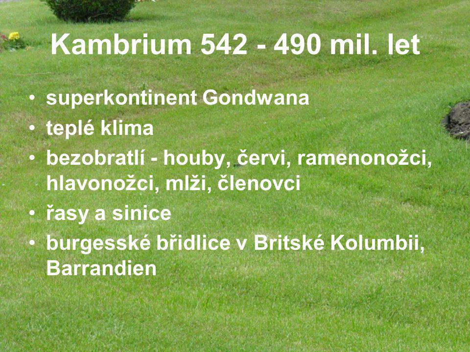 Kambrium 542 - 490 mil. let superkontinent Gondwana teplé klima