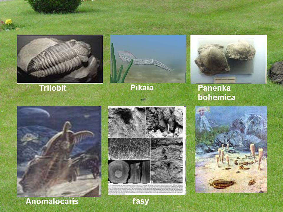Trilobit Pikaia Panenka bohemica Anomalocaris řasy
