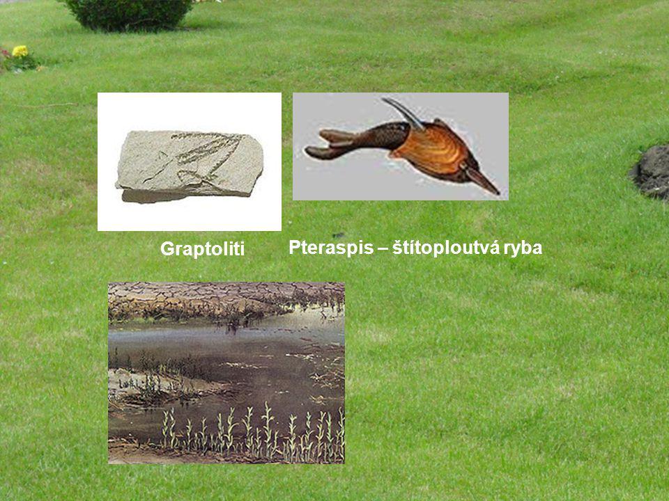 Graptoliti Pteraspis – štítoploutvá ryba