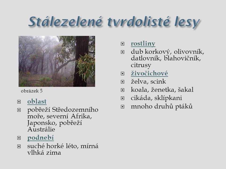 Stálezelené tvrdolisté lesy