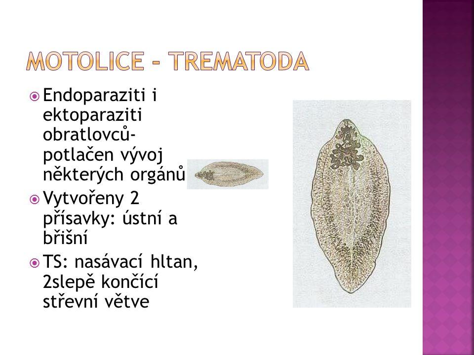 Motolice - Trematoda Endoparaziti i ektoparaziti obratlovců- potlačen vývoj některých orgánů. Vytvořeny 2 přísavky: ústní a břišní.