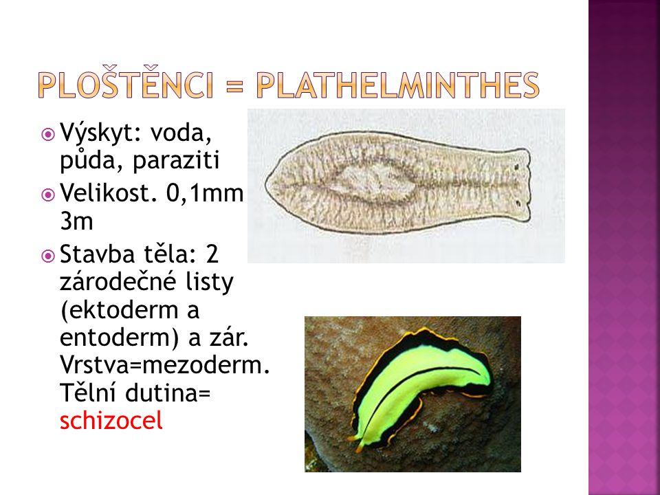 Ploštěnci = Plathelminthes