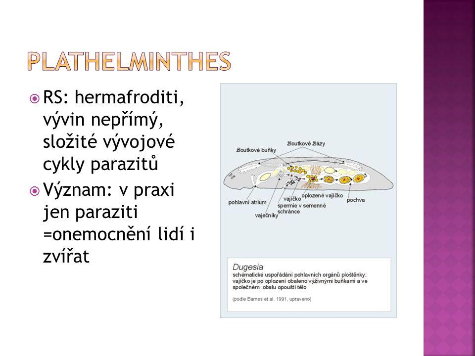 Plathelminthes RS: hermafroditi, vývin nepřímý, složité vývojové cykly parazitů.