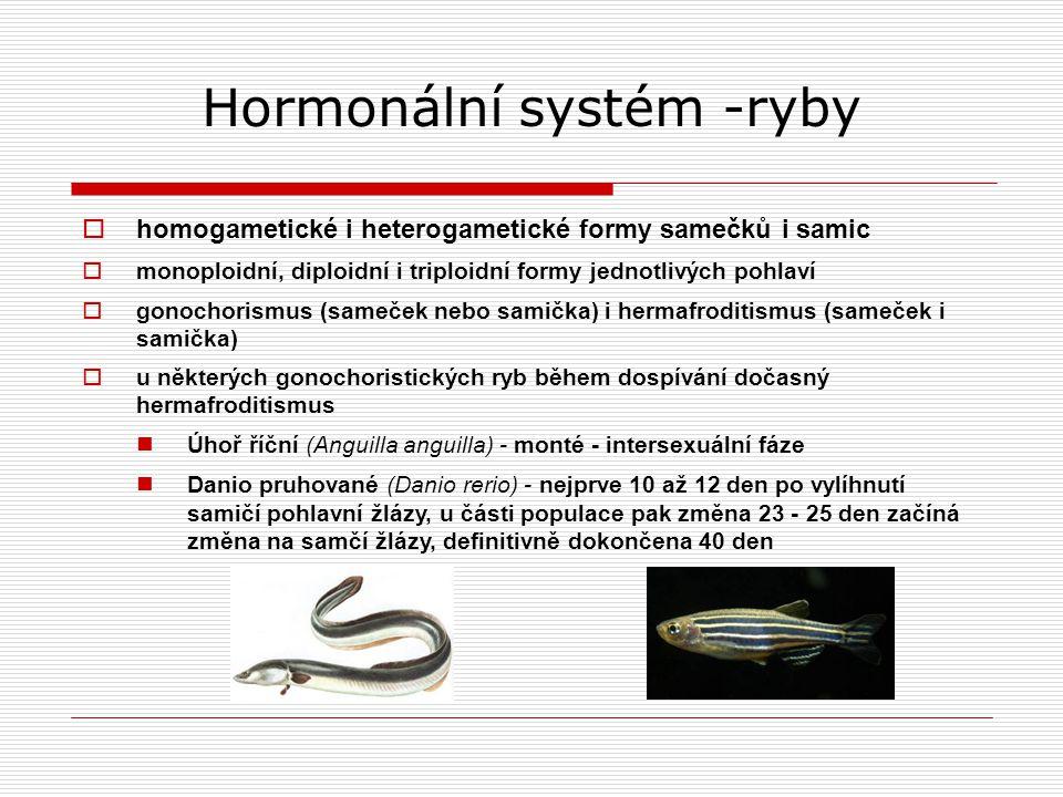 Hormonální systém -ryby