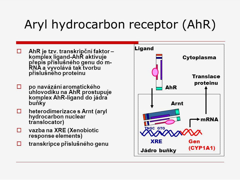Aryl hydrocarbon receptor (AhR)