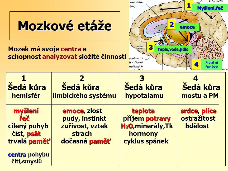 Mozkové etáže 1 2 3 4 Šedá kůra Šedá kůra Šedá kůra Šedá kůra 1 2 3