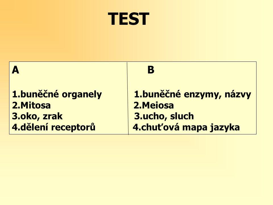 TEST A B 1.buněčné organely 1.buněčné enzymy, názvy 2.Mitosa 2.Meiosa