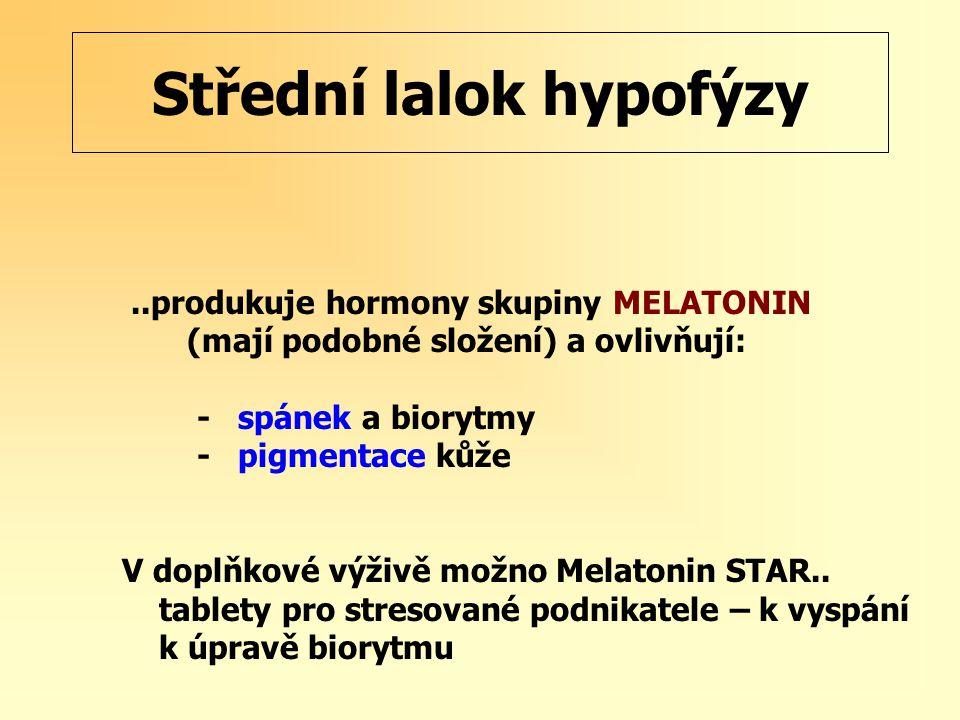 Střední lalok hypofýzy