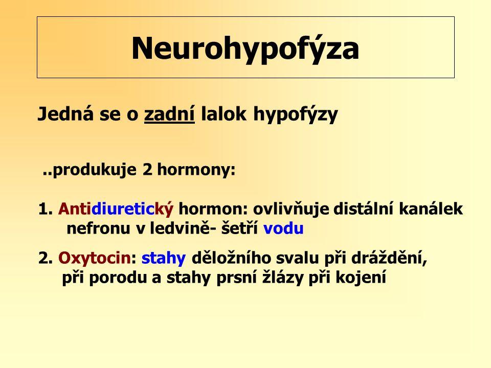Neurohypofýza Jedná se o zadní lalok hypofýzy ..produkuje 2 hormony: