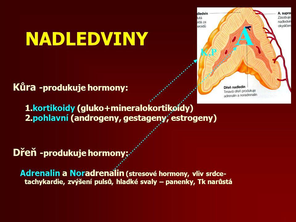 A NADLEDVINY K,P Kůra -produkuje hormony: Dřeň -produkuje hormony: