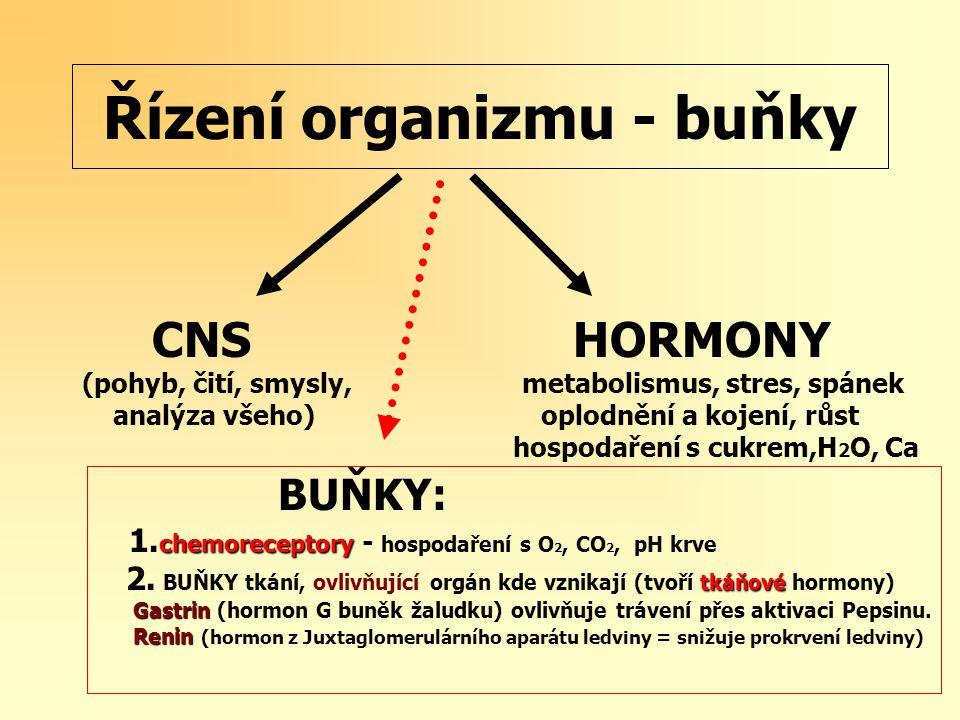 Řízení organizmu - buňky