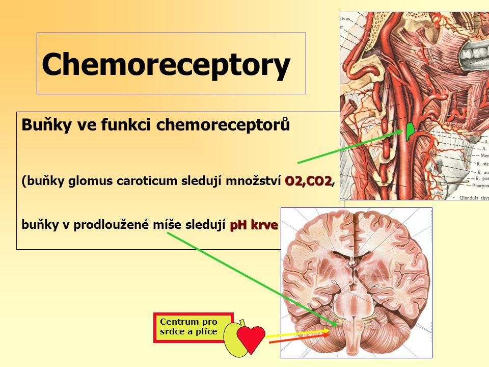 Chemoreceptory Buňky ve funkci chemoreceptorů