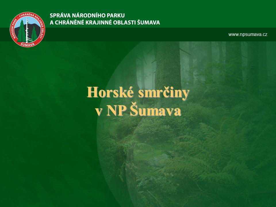 Horské smrčiny v NP Šumava