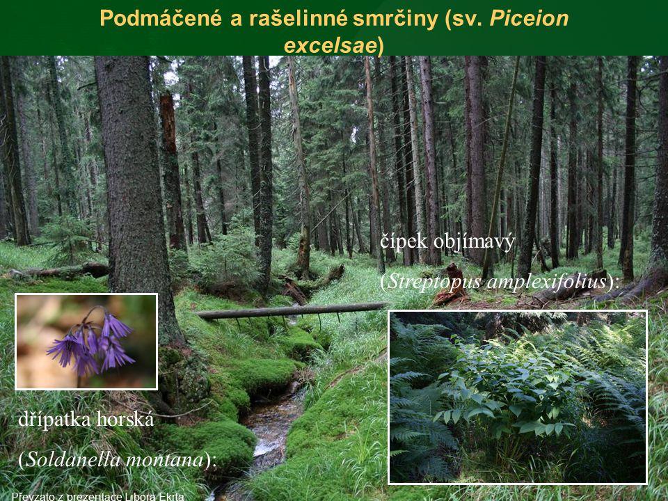 Podmáčené a rašelinné smrčiny (sv. Piceion excelsae)