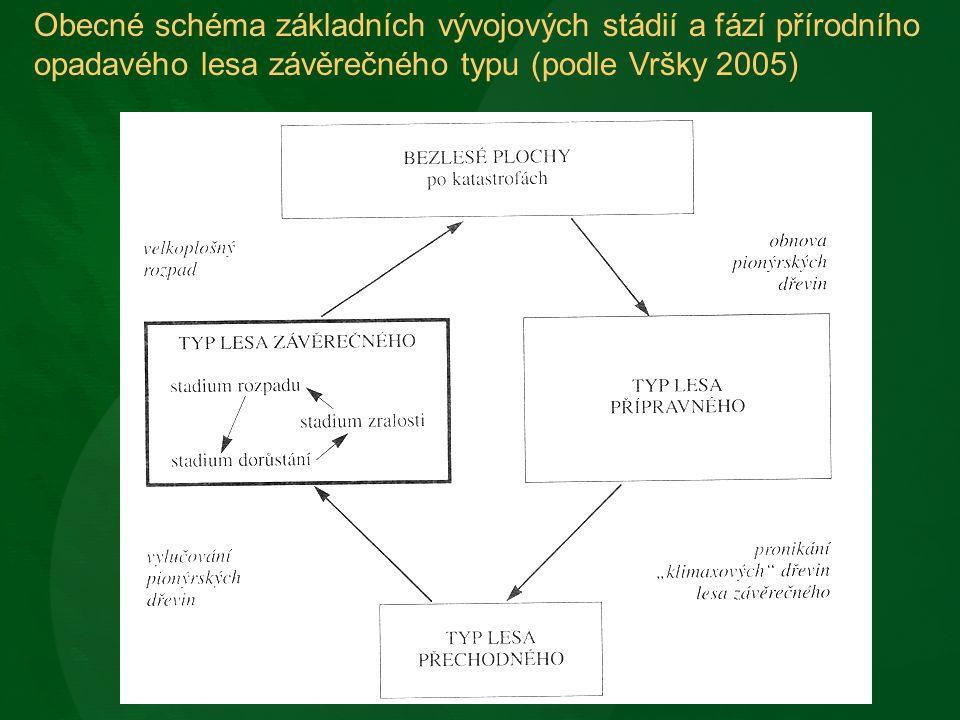 Obecné schéma základních vývojových stádií a fází přírodního opadavého lesa závěrečného typu (podle Vršky 2005)