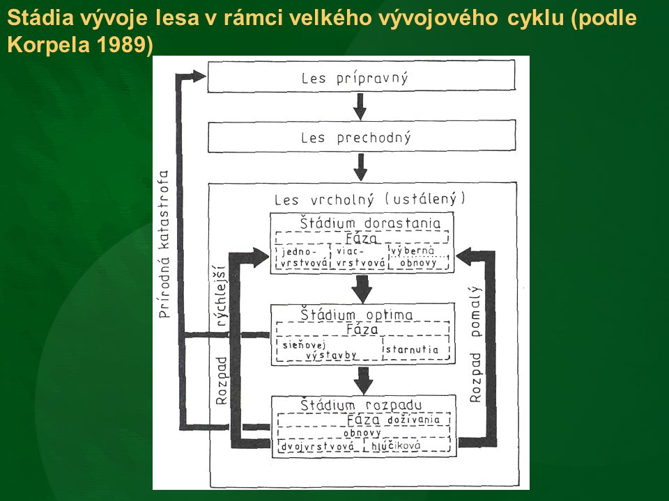 Stádia vývoje lesa v rámci velkého vývojového cyklu (podle Korpela 1989)