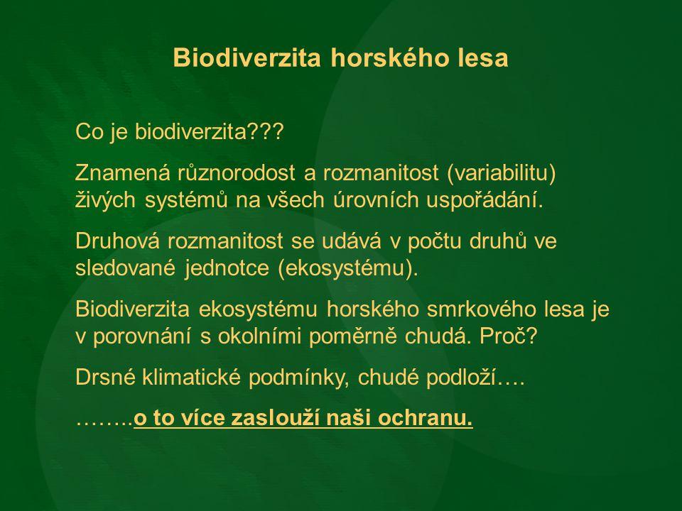 Biodiverzita horského lesa