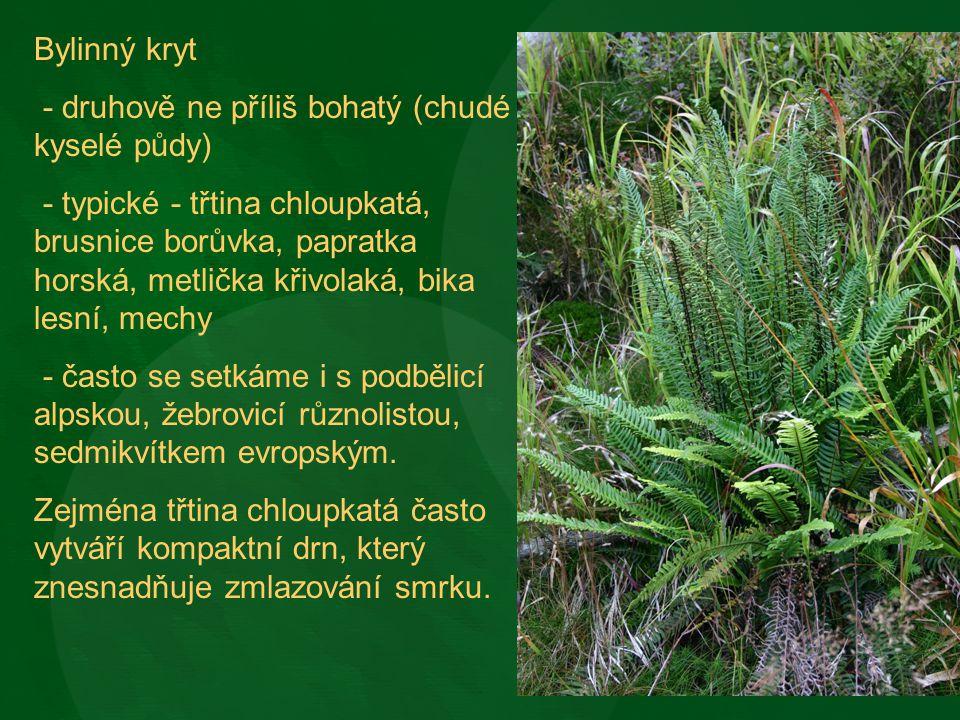 Bylinný kryt - druhově ne příliš bohatý (chudé kyselé půdy)