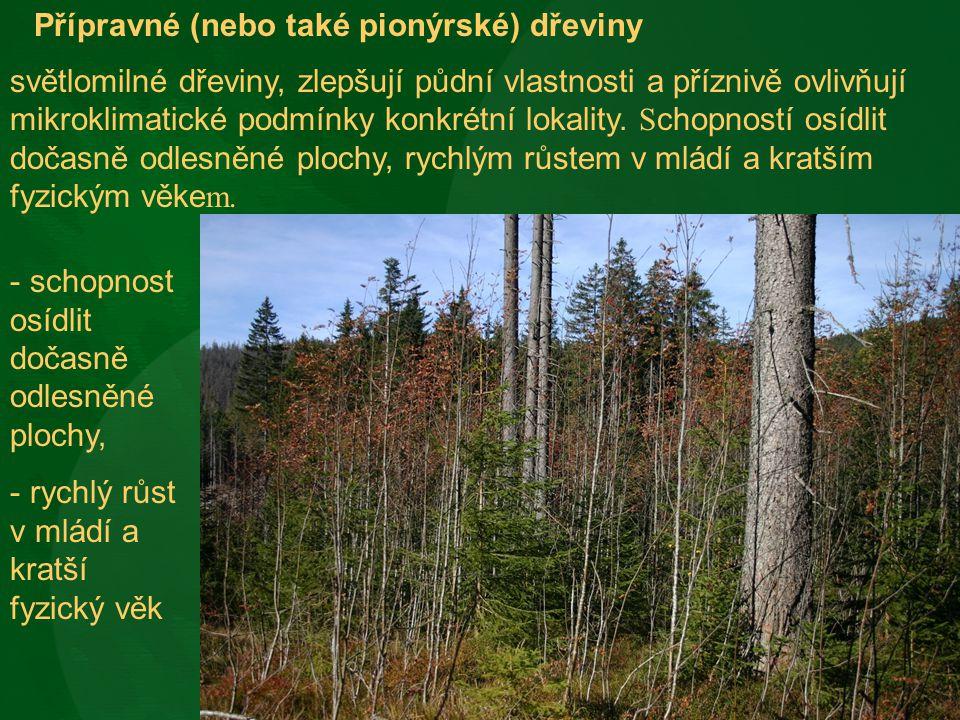 Přípravné (nebo také pionýrské) dřeviny