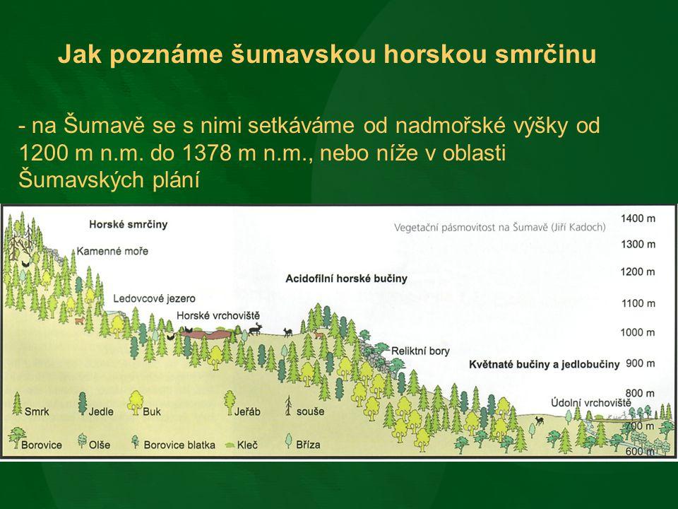 Jak poznáme šumavskou horskou smrčinu