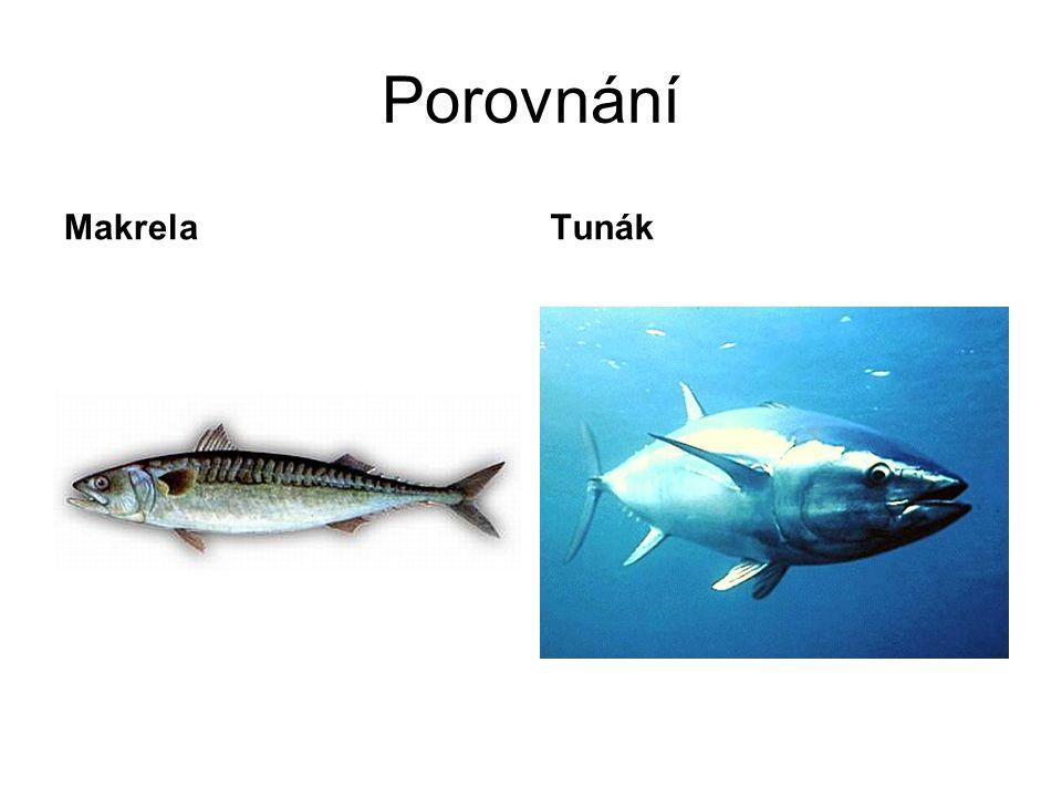 Porovnání Makrela Tunák