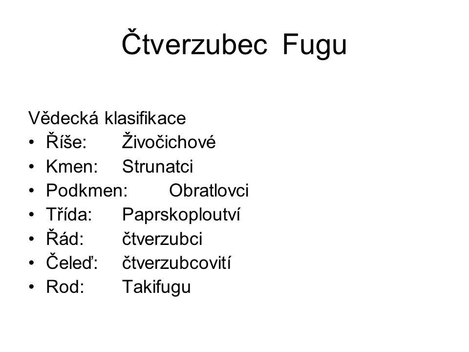 Čtverzubec Fugu Vědecká klasifikace Říše: Živočichové Kmen: Strunatci
