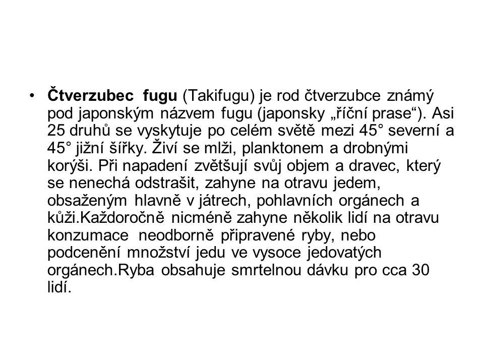 """Čtverzubec fugu (Takifugu) je rod čtverzubce známý pod japonským názvem fugu (japonsky """"říční prase )."""