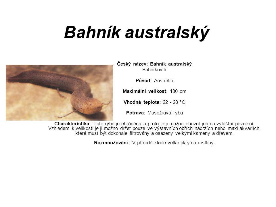 Český název: Bahník australský