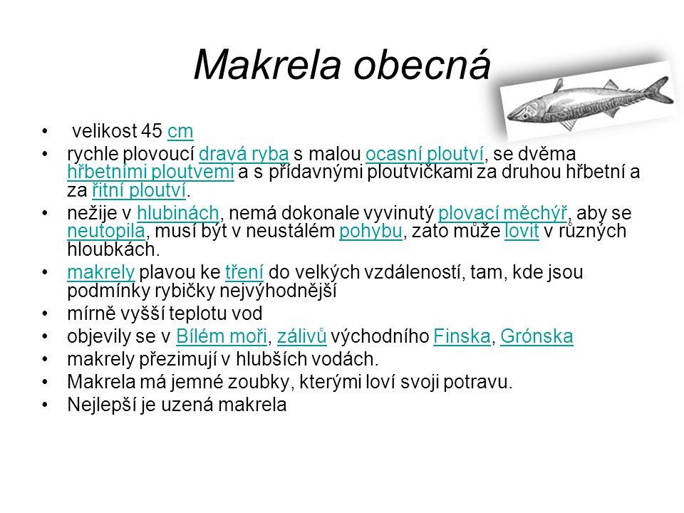 Makrela obecná velikost 45 cm