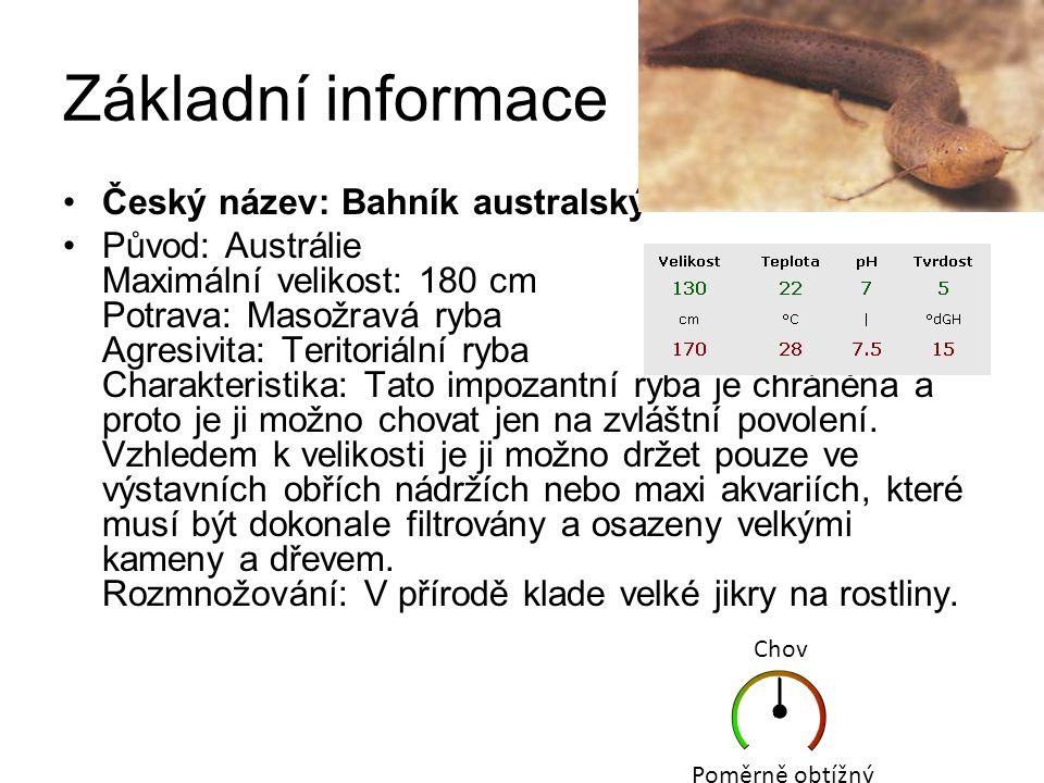 Základní informace Český název: Bahník australský